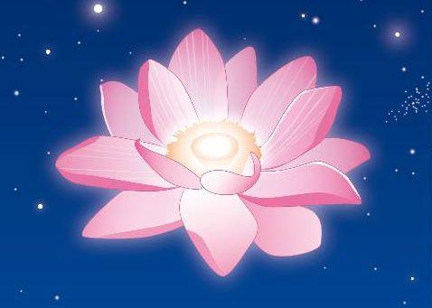 starlight-lotus